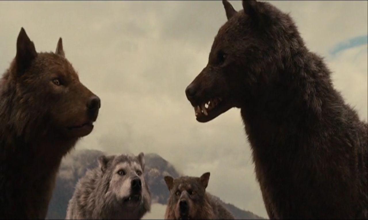 Farlige ulve